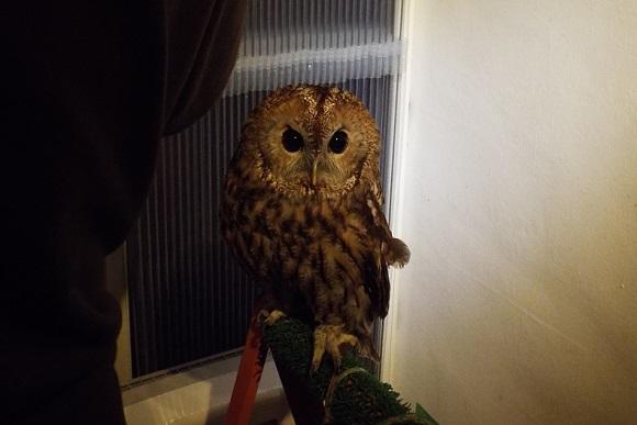 owls (7)