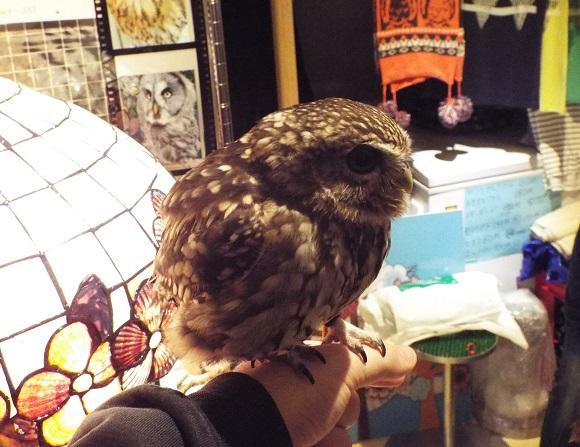 owls (9)