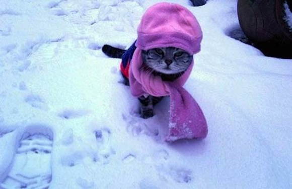 crazy-cat-fashions-snow-bunnyer--large-msg-12893319349