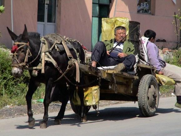 donkey-carts-186121_640