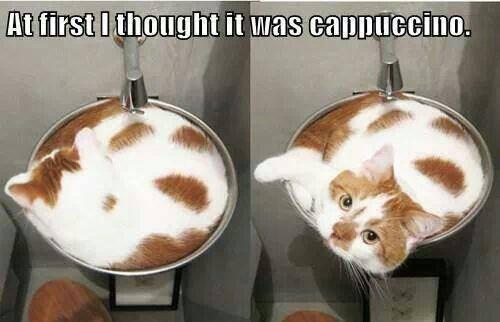 latte art 7