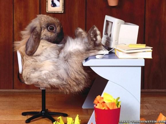 bunny02