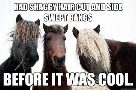 Hipster horses