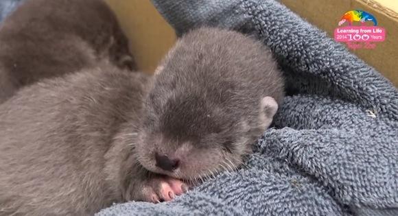 Otter 0