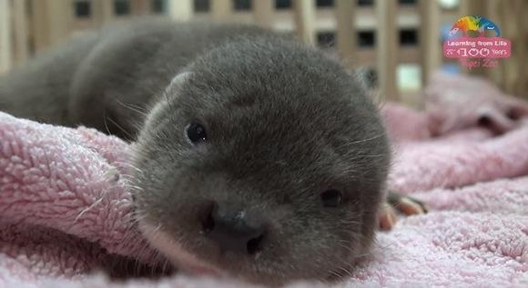 Otter 4