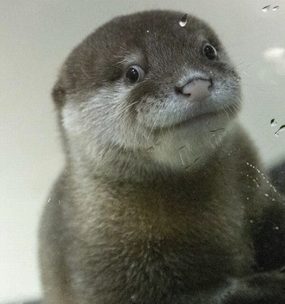 otter top