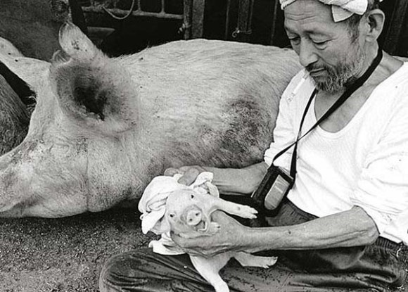 pig-guy-7