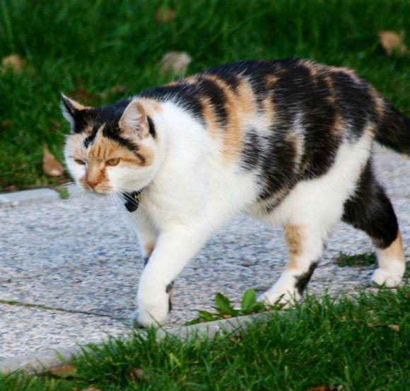 Cat walkingbyakj1706
