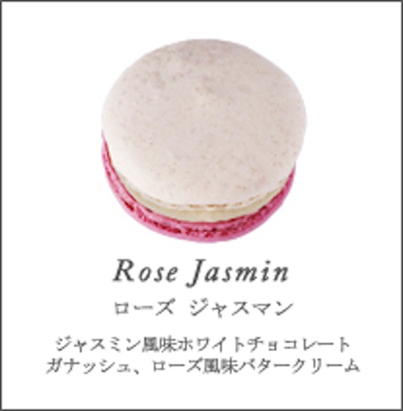 kitty rose jasmine