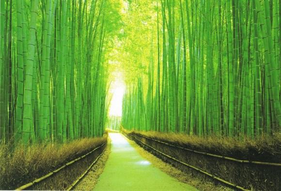 Kyoto Arashiyama's Sagano Bamboo Forest grove, 嵯峨野竹林 京都 嵐山