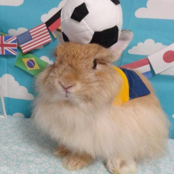 World Cup bunny