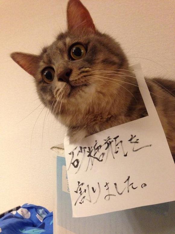 badcat (1)
