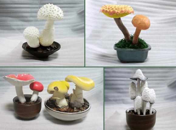takuto shibuya mushroom kinoko bonsai