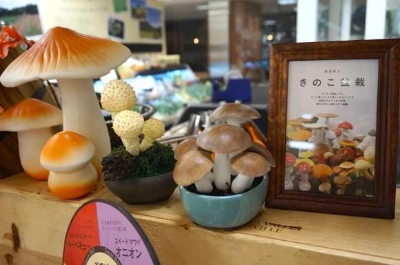 takuto shibuya mushroom kinoko bonsai display Oisix