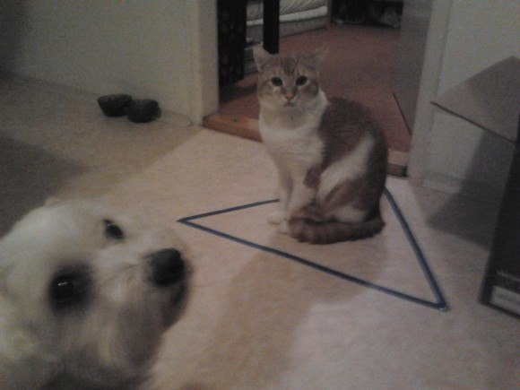 Circle did not work. Triangle, however, did. - Imgur