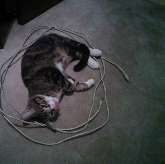 I trapped a cat in my CAT - Imgur