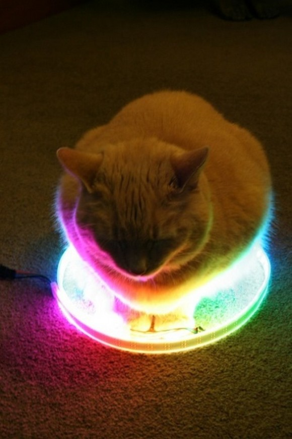 led strip cat circle - Imgur