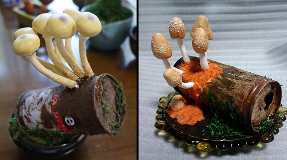 takuto shibuya mushroom kinoko bonsai, empty cans
