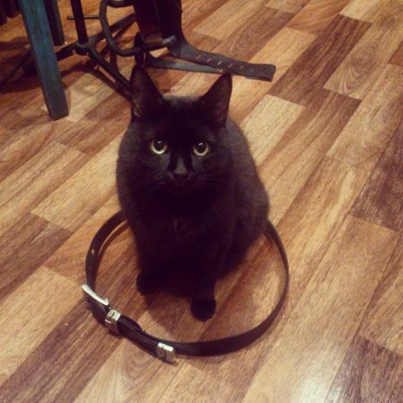 Some kind of black (cat) magic - Imgur