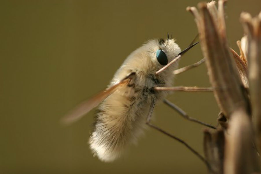 beefly1