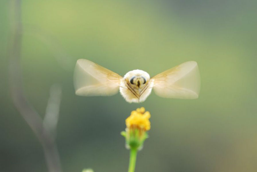 beefly3