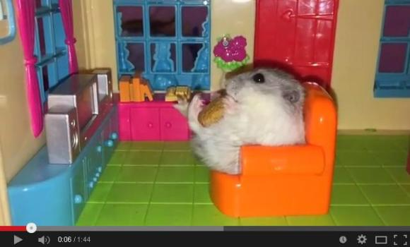 hold me closer tiny hamster