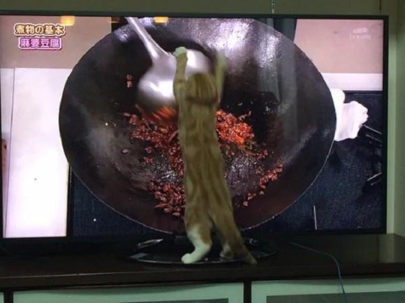 cat cooking 2