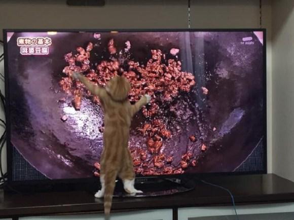 cat cooking 3