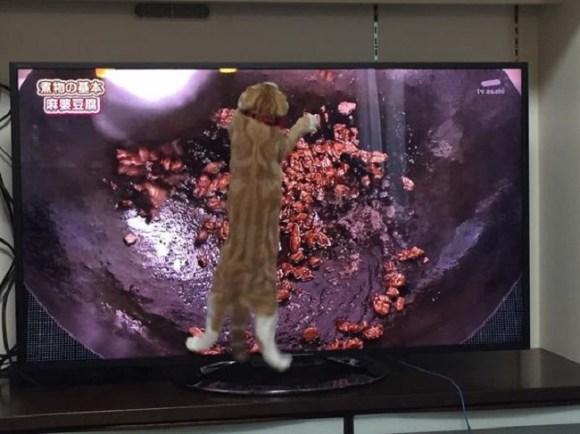 cat cooking 5