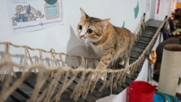 cat-museum2-data