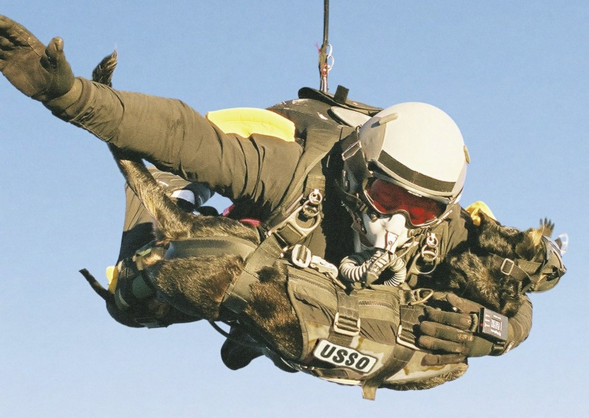 in-this-case-a-us-soldier-jumps-from-an-airplane-with-his-dog-cara-breaking-the-record-for-highest-mandog-parachute-deployment-they-jumped-9174-metres