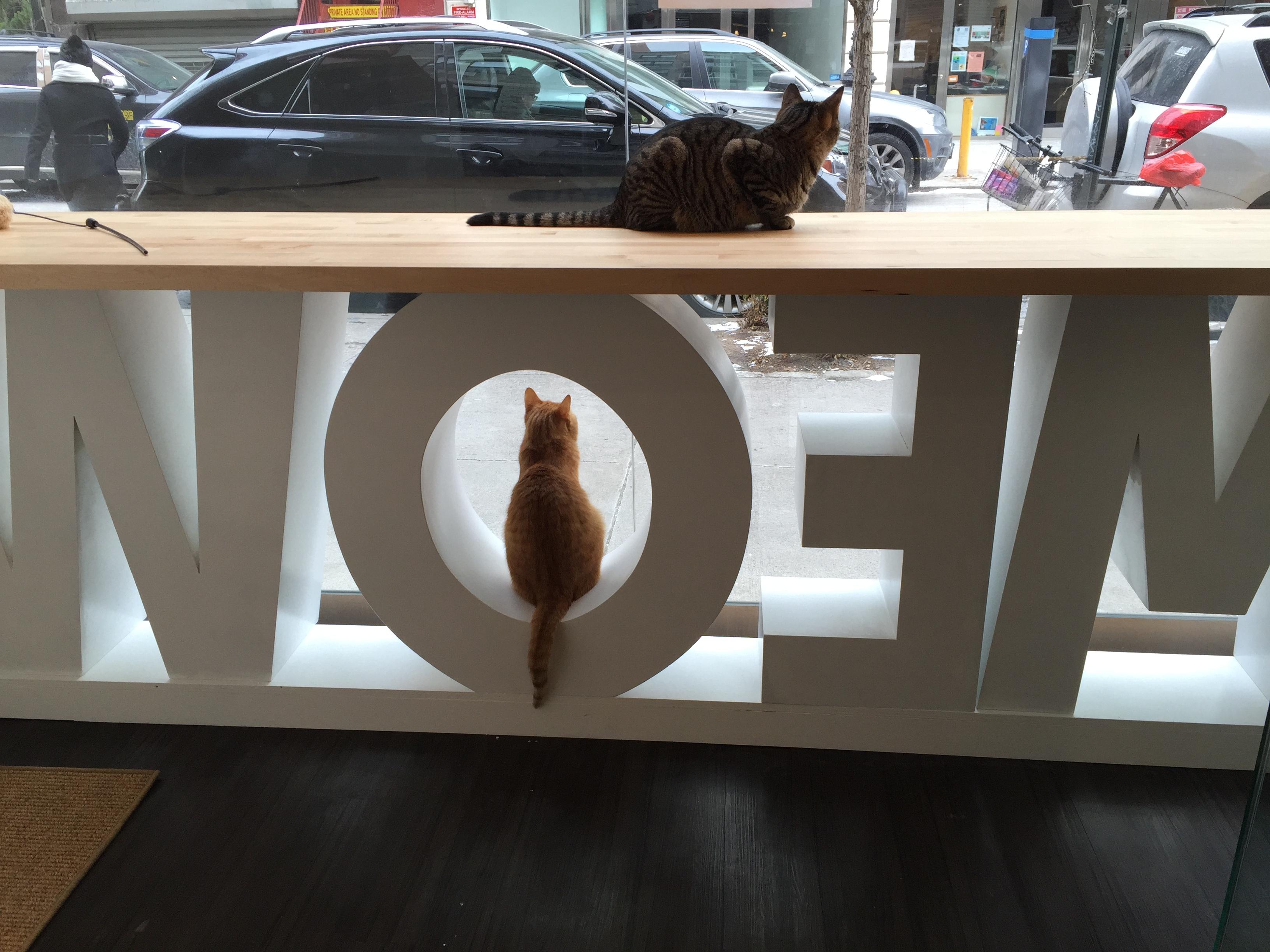 Meow-backwards