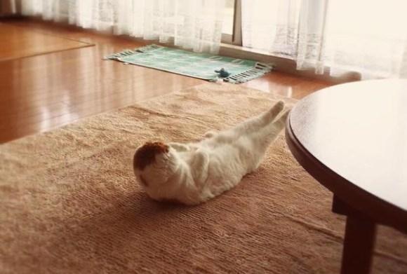 Cat yoga3