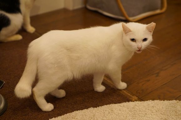 cats9