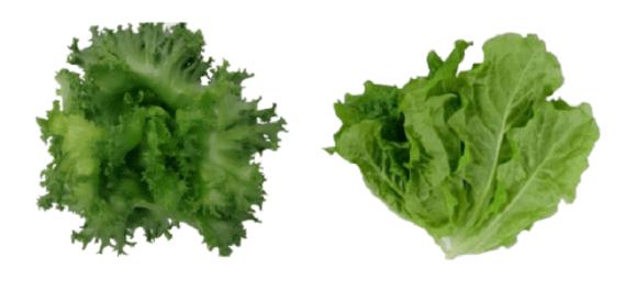 tokyo salad 2