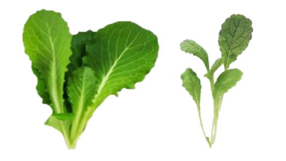 tokyo salad 3