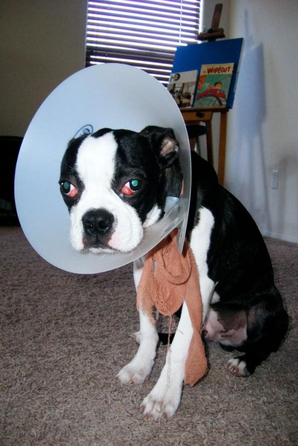 dog cone head