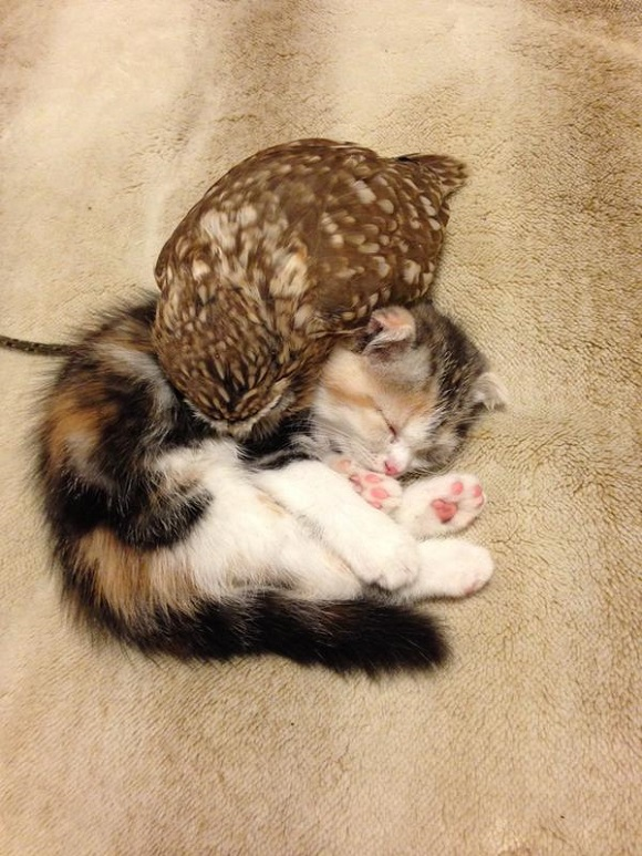 owlcat 2