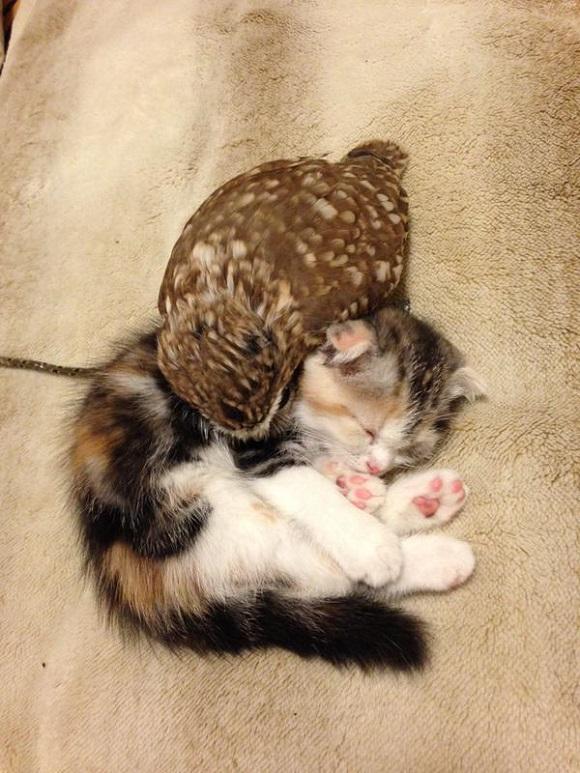 owlcat 3