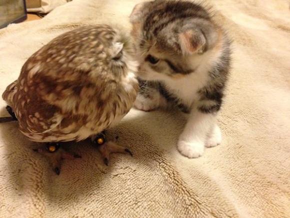 owlcat 4