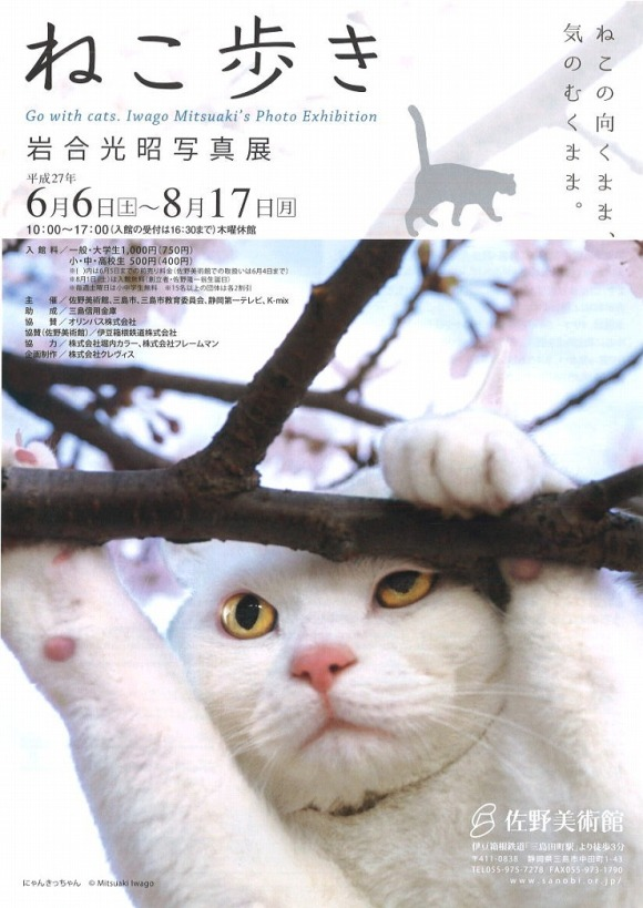 gowithcats