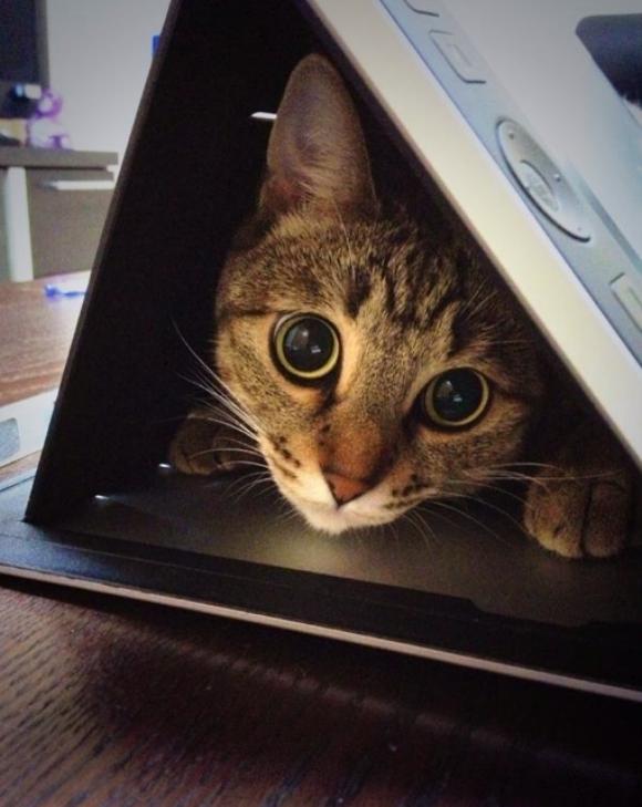 tabletcat