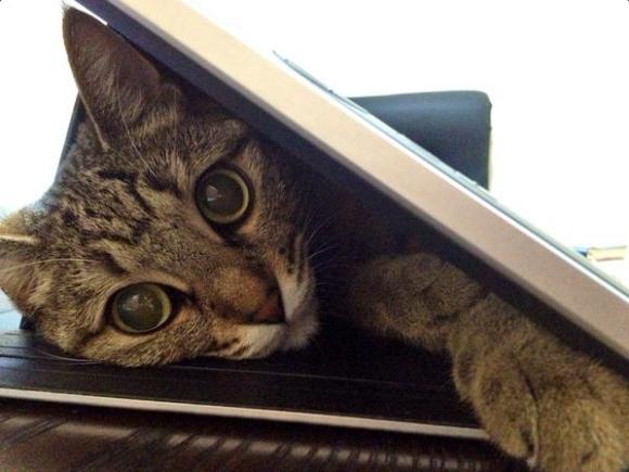 tabletcat2