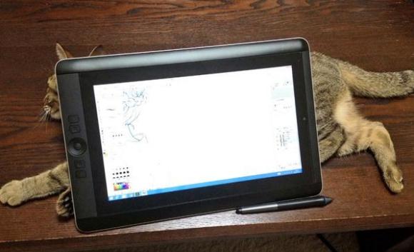 tabletcat4