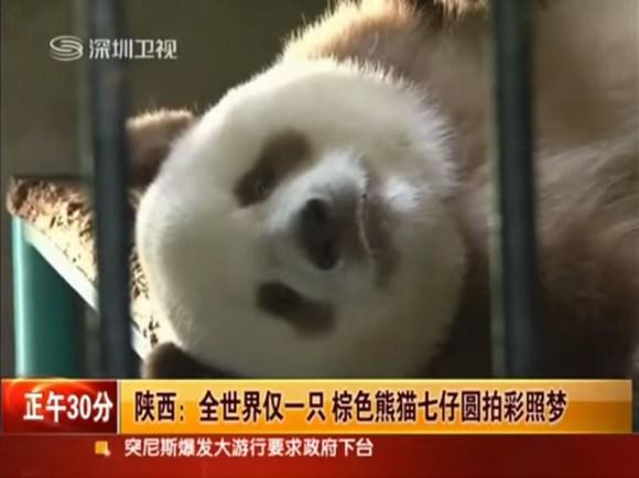 panda bibbly