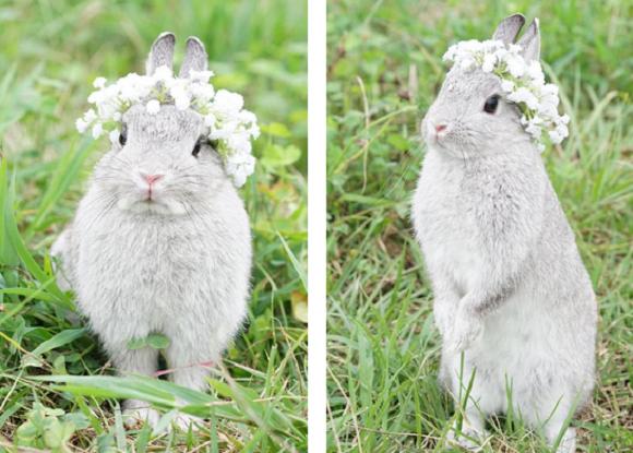 bunny 6