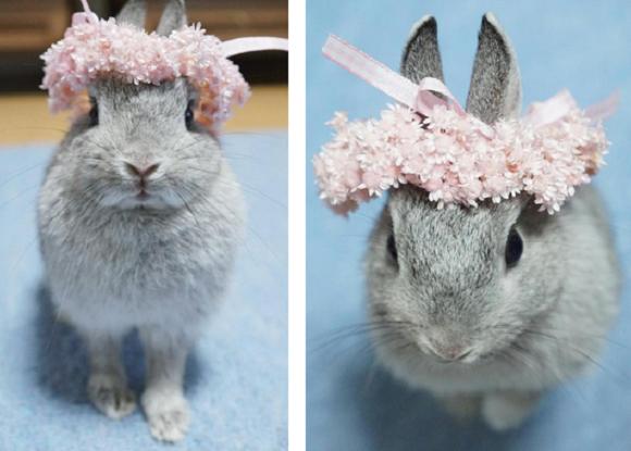 bunny 7