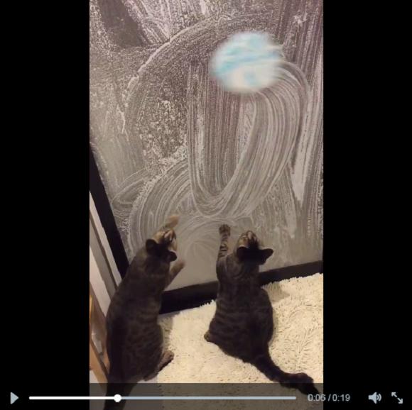 cat wash 1