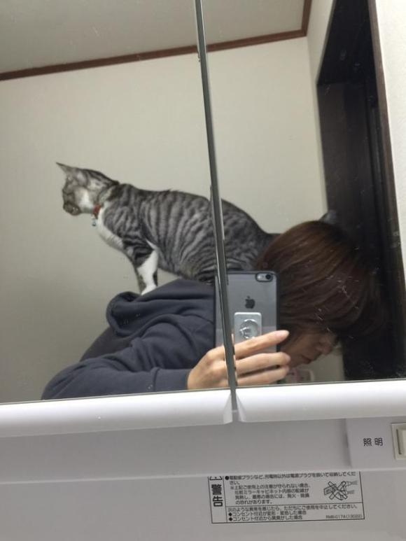 kitty (1)