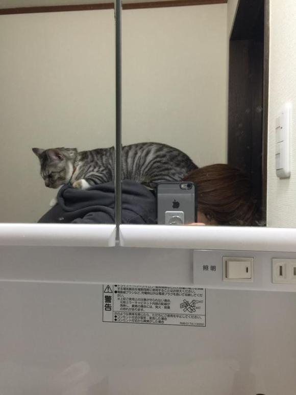 kitty (3)